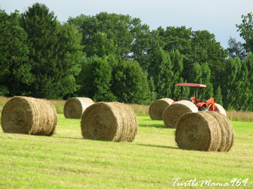 Six Haystacks and a Tractor
