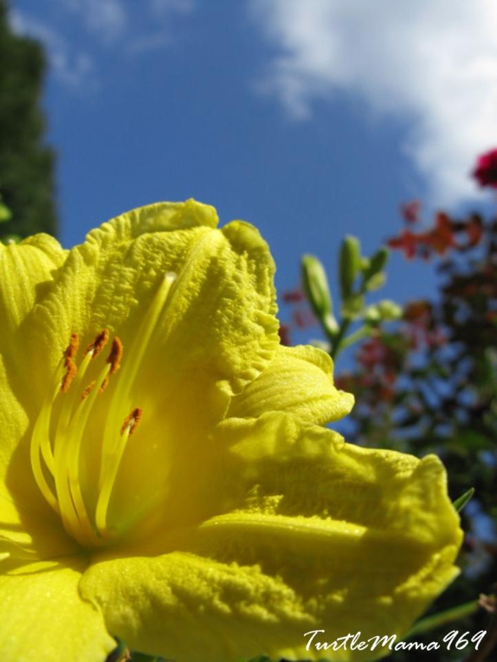 Yellow Flower Sky